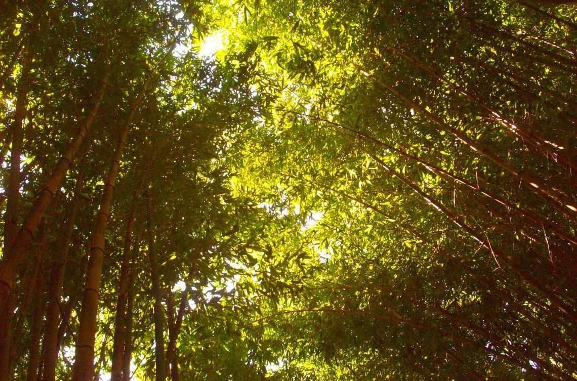 bambouseraie (1)