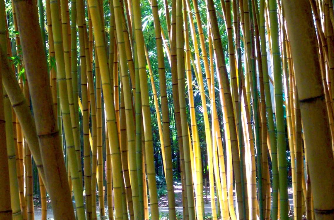 bambouseraie (3)