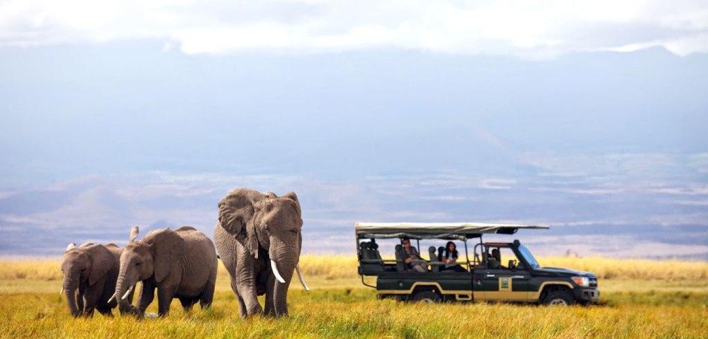 safari-afrique