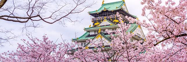 sakura-japon