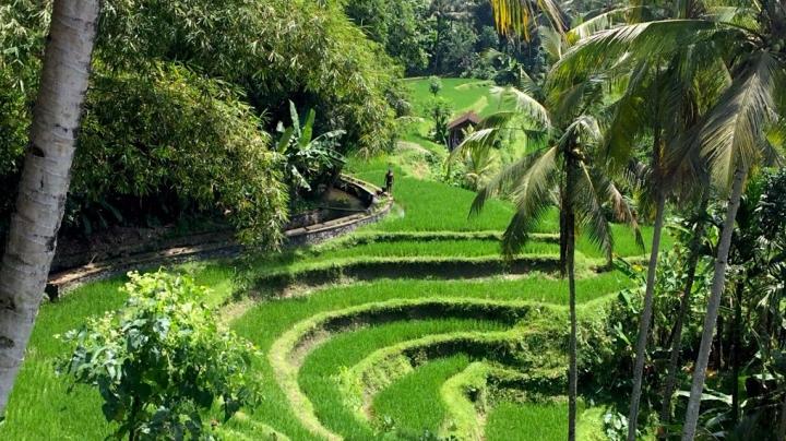 Escapade à Ubud