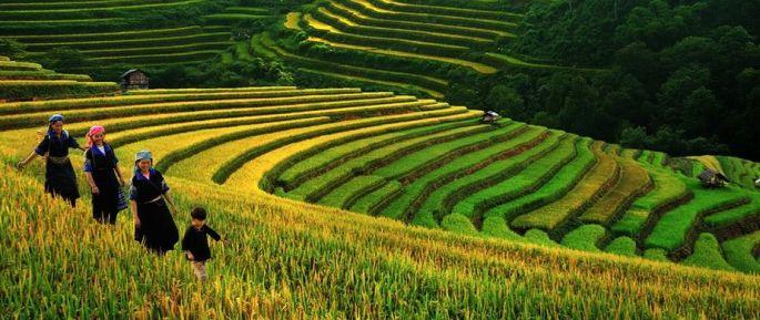 http_sapatoursfromhanoi.comwp-contentuploads201610sapa-terraced-rice-fields