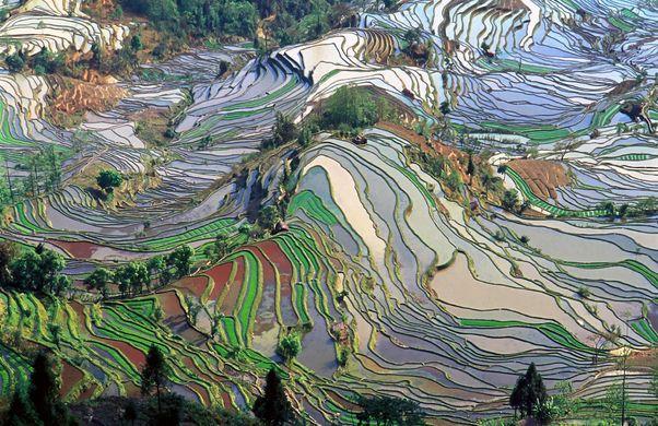 https_upload.wikimedia.orgwikipediacommons770terrace_field_yunnan_china_denoised
